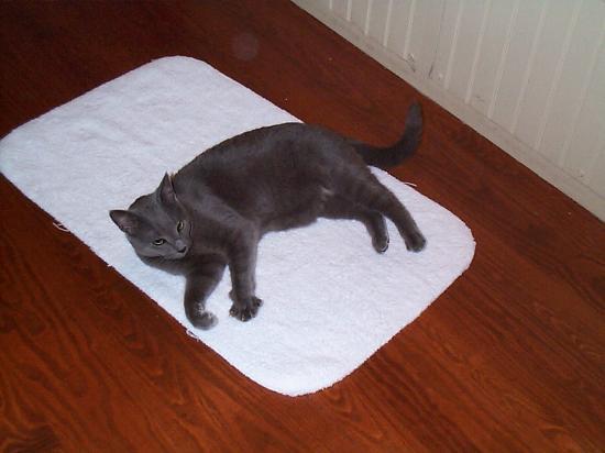 The Sayre Mansion Inn: Inkeeper's cat liked the bath mat