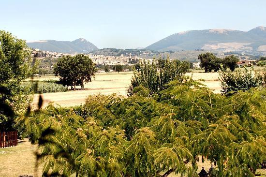 Terre Del Cantico : Veduta di Spello dal porticato del casale