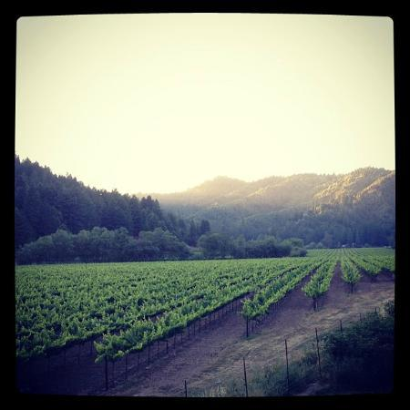 West Sonoma Inn & Spa: View from the private Vineyard Cottage Suite patio