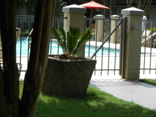 Ramada New Iberia: Shade near pool