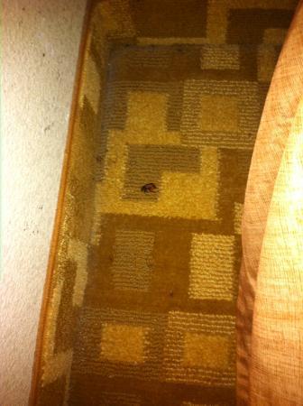 Airway Inn: roaches