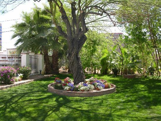 Maricopa Manor Bed and Breakfast Inn: Wedding was held here under the big tree