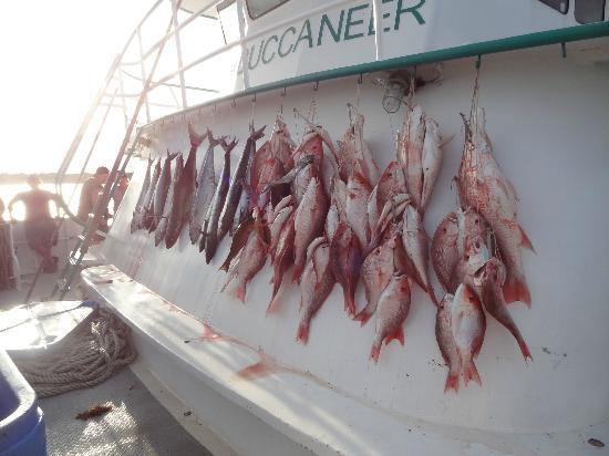 Everyone caught fish picture of galveston party boats for Deep sea fishing houston