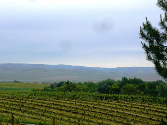 Basel Cellars Estate Winery: The vistas of the Walla Walla Valley
