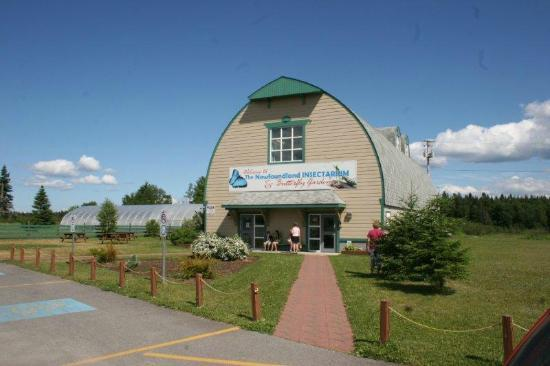 Holiday Inn Express Deer Lake: NL Insectarium, nearby attraction.