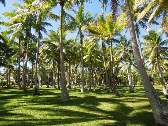 Vahine Private Island Resort: Coconut groves