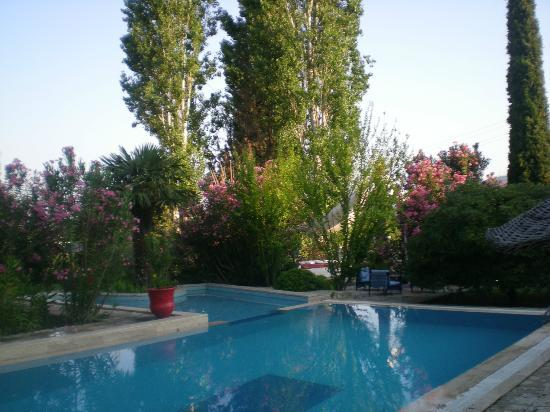 Bakkhos Guesthouse: The wonderful pool and gardens.