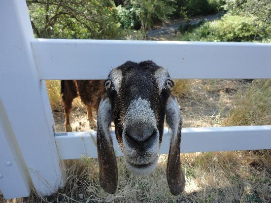 Country Willows Bed and Breakfast Inn: Clementine looking for a pat