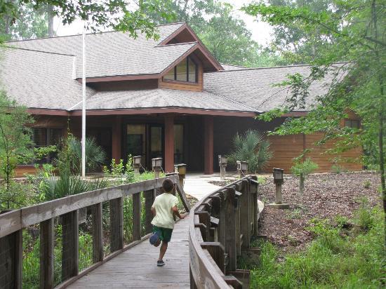 Louisiana State Arboretum: Arboretum