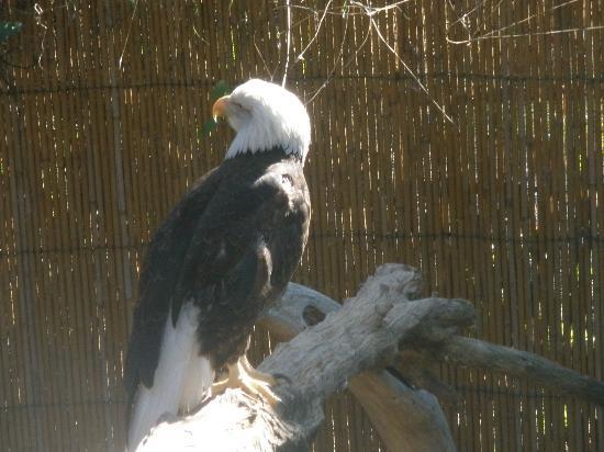 Alexandria Zoological Park: Eagle