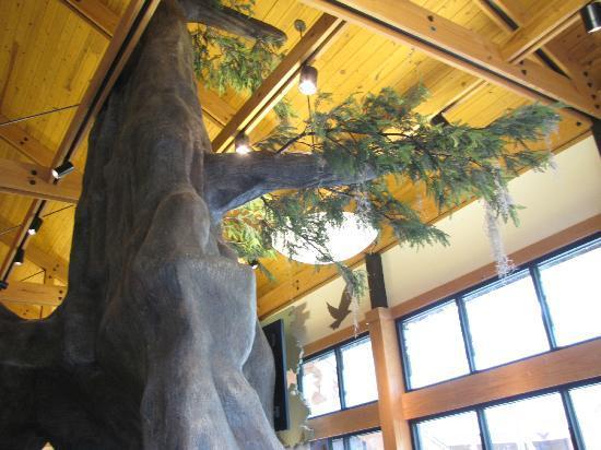 Louisiana State Arboretum: Inside Arboretum