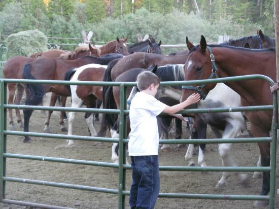 Skyline Guest Ranch and Guide Service: Horses onsite