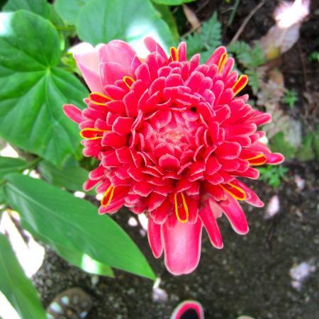 Nature's Paradise: Botanical gardens