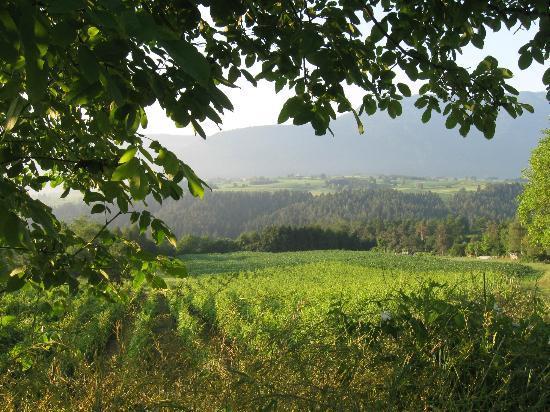 Maso Pra Cavai: Early morning fields