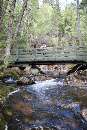 Evasion Gite et Refuges: Pont sur la rivière la Diable au Parc National du Mont Tremblant