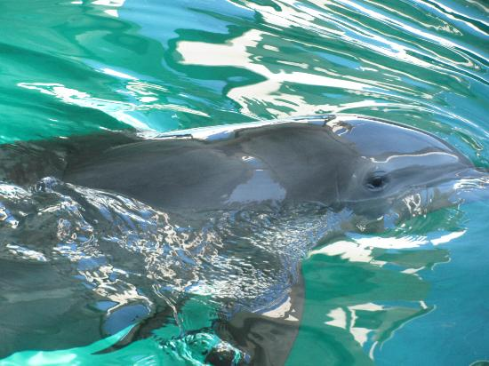 Dolphin Show Picture Of Clearwater Marine Aquarium