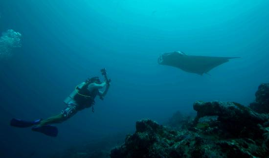 Euro Divers at Kurumba Maldives: Manta Rays at Manta Point