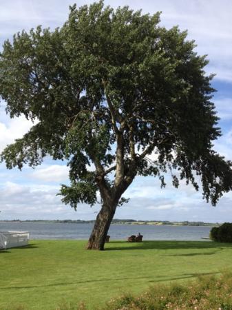 Ballebro Faergekro: The beautiful tree outside