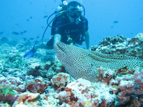 Euro Divers at Kurumba Maldives: Honeycomb Moray Eel