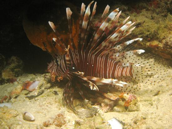 Euro Divers at Kurumba Maldives: Lion Fish on a Night Dive