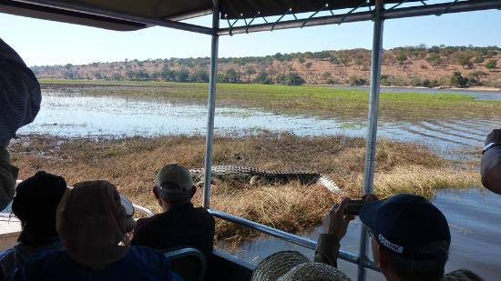 Elephant Valley Lodge: As seen on Chobe River cruise