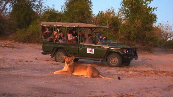 Elephant Valley Lodge: Our Lion at Sunrise