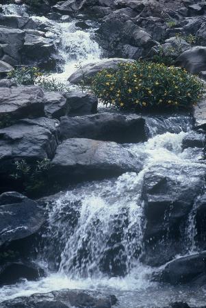 El Meson Del Ticuz: arroyo en julio