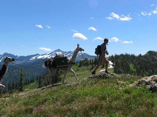 Swan Mountain Outfitters Day Tours: Very Scenic Alpine Trail