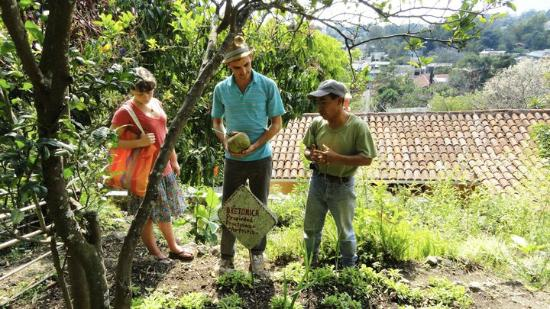 Maya Traditions Foundation: Learning about the Medicinal Plants
