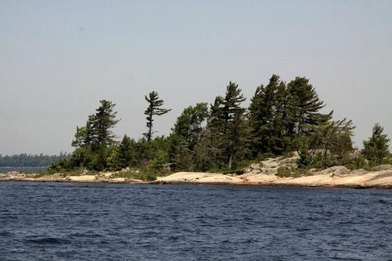Miss Midland  Boat Cruises : Wind blown trees