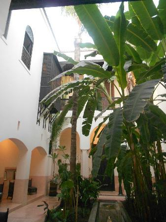 Riad 72: The banana trees