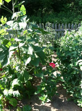 River Bend Farm: vegetable garden