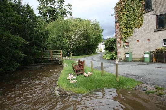 Bassenthwaite Hall Farm: Area towards river frontage,