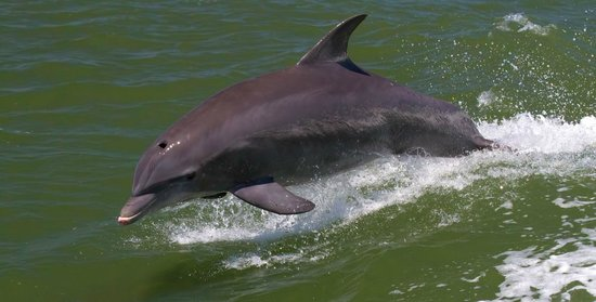 Dolphin chasing the tour boat .... in the wake