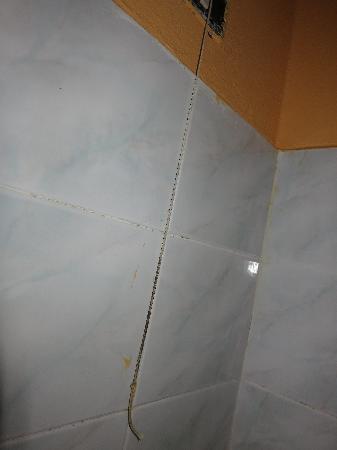 22 Marzo Hotel: Snor til å slå på vifta, hang i dusjen, og var helt sort ene enden! Uff!!