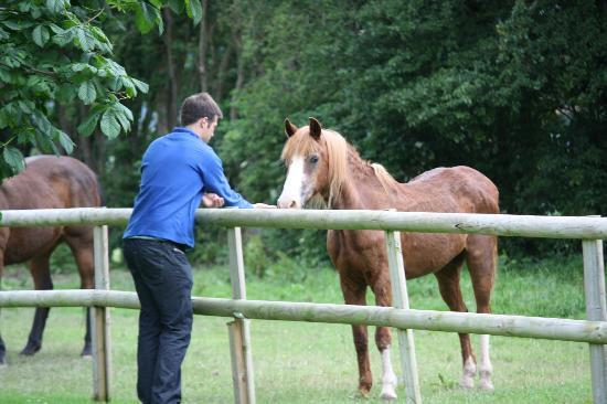 Pentre Mawr Country House: Feeding the pony