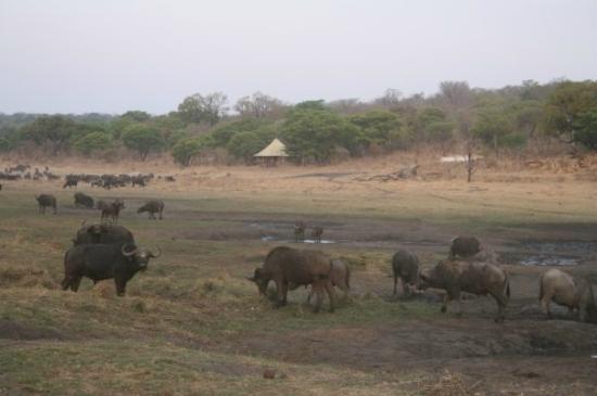 Matetsi Private Game Reserve: Campo