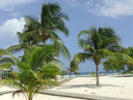 Tropical Island Beach Ambience Sound: Picture Of Cayman Brac Beach Resort