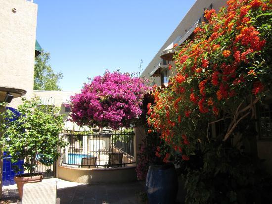 El Cordova Hotel: Flowers