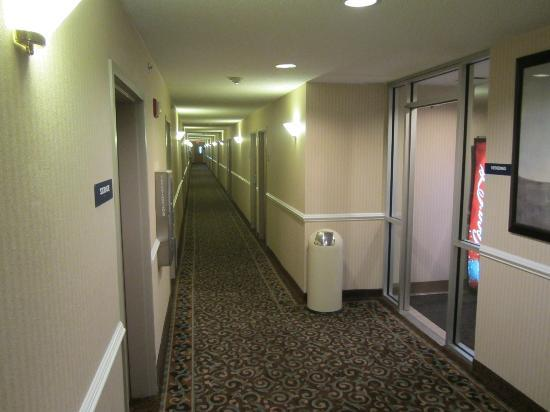 Microtel Inn by Wyndham Erie: Hallway off of elevators