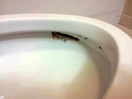 Candlewood Suites Virginia Beach / Norfolk: Disgusting toilet bowl.