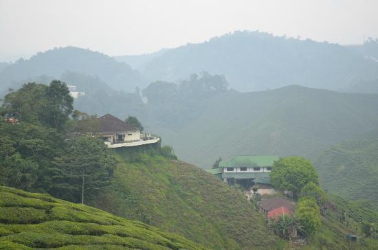 Valleyview: a house overlooking a tea plantation at cameron highlands