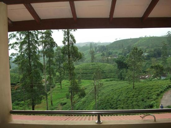 View from Tea Hill's Bungalow