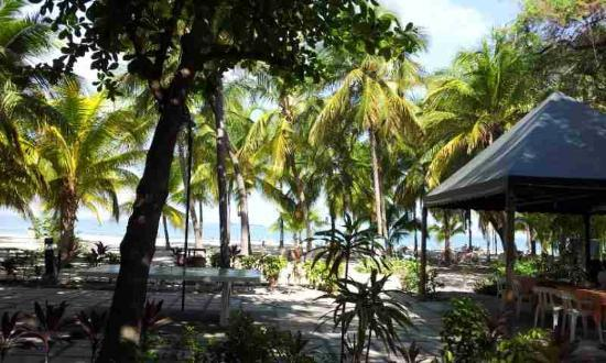 Irotama Resort: Beach view - lots of palmtrees