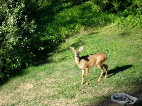 Yosemite's Ravensbrook Bed & Breakfast: a deer near the house