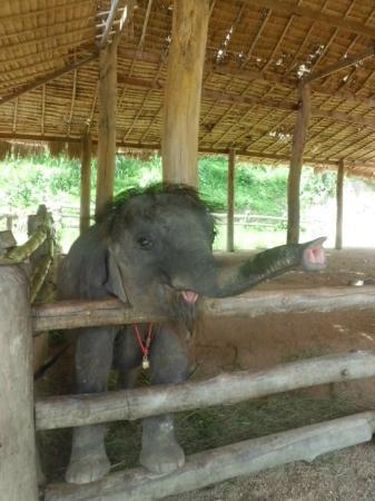 Lampang, Thailand: Tang Mo