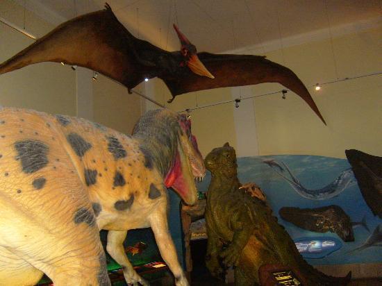 萨尔茨堡自然历史博物馆