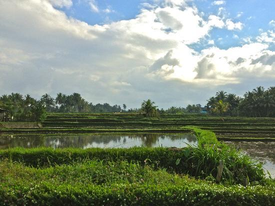 The Samara: Rice fields and dramatic sky