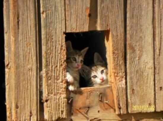 Antica Locanda Sant'Anna: cats