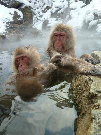 Shiga Kogen Prince Hotel: Relaxing!!